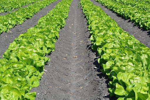 biostymulatory dla roślin