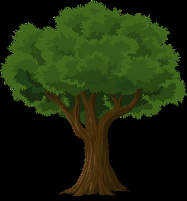 pielęgnacja drzew warszawa