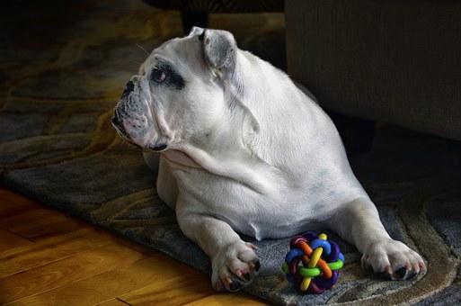 posłania dla dużych psów