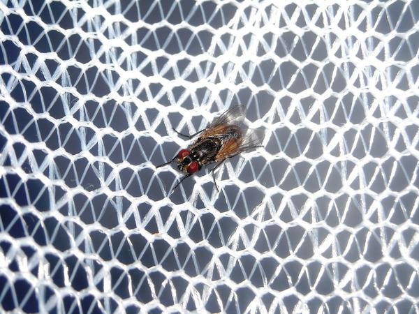 moskitiery Gdynia