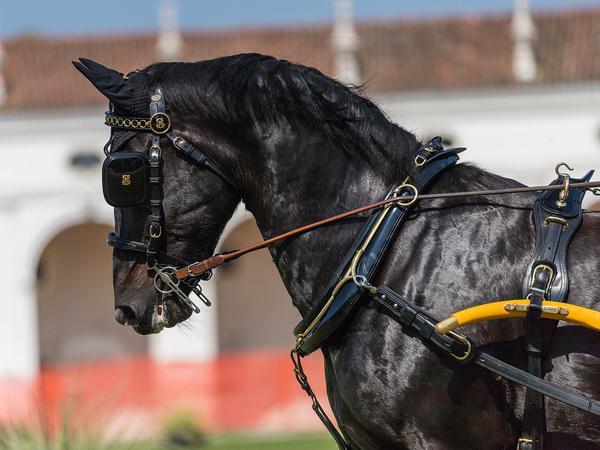 pasze dla koni sportowych